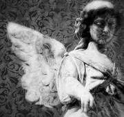 5th Feb 2015 - texture angel