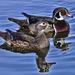 Meet The Quackers by joysfocus