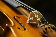 6th Feb 2015 - Violin