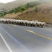 Sheep running by maggiemae