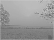 8th Feb 2015 - Cold and foggy morning