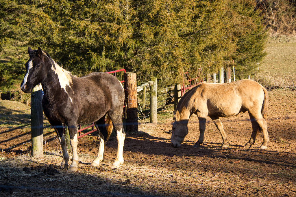 H = horses by randystreat