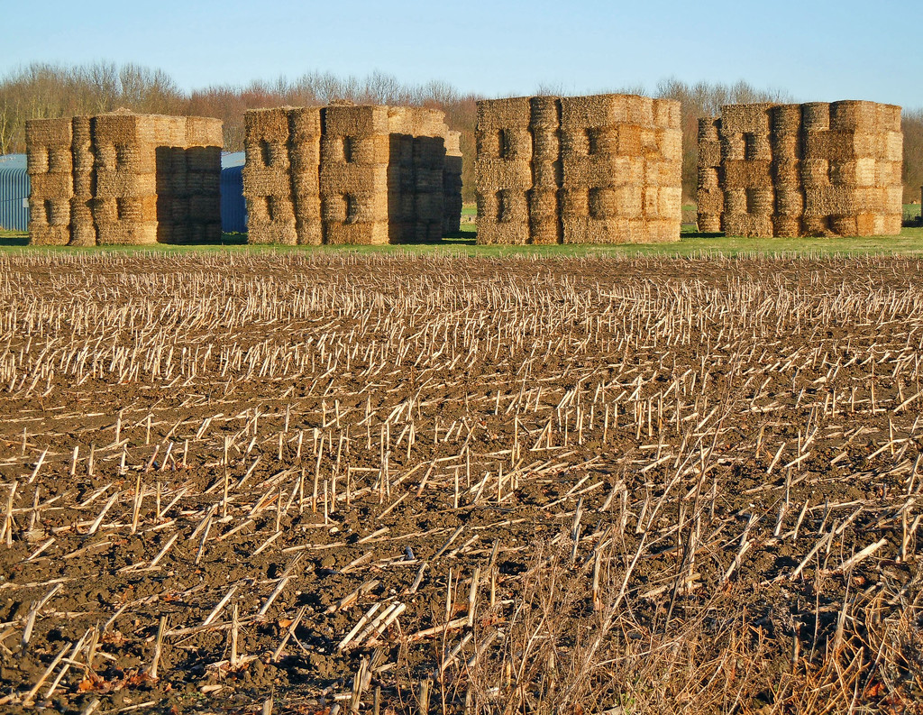 Cathedrals of straw by pistonbroke