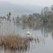Landscape Challenge Day 2 Llangorse Lake by susiemc