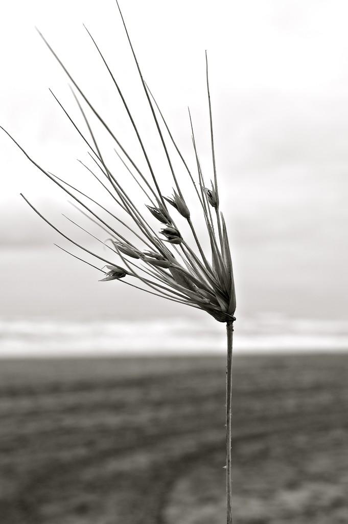 Wild grass by brigette