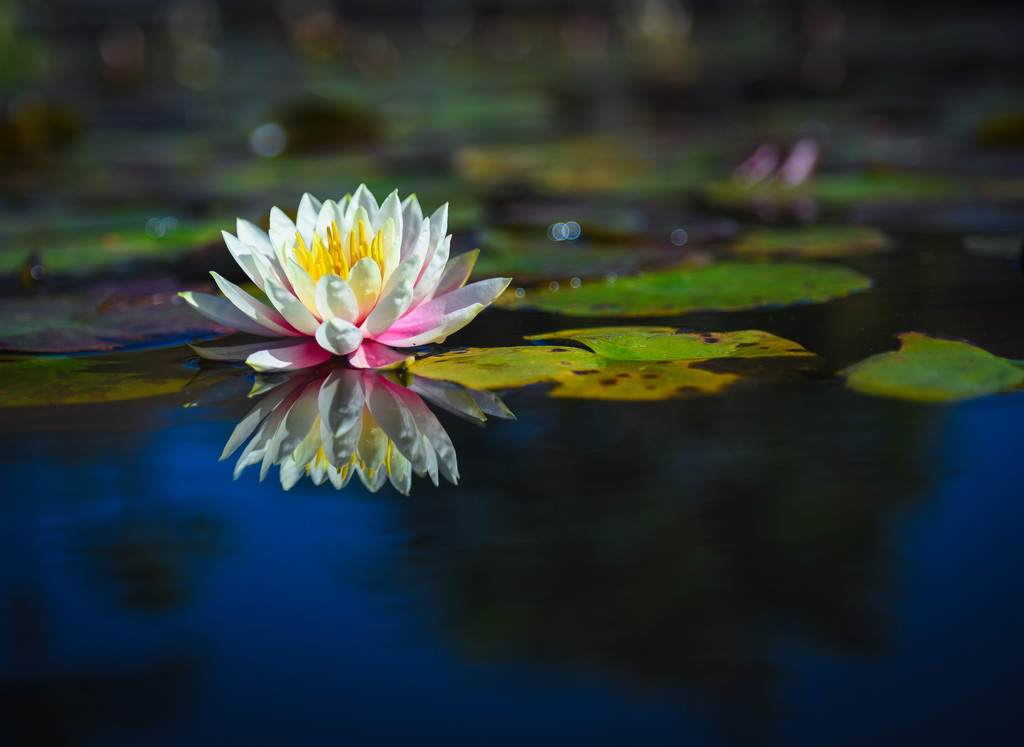 On Blue Pond by stray_shooter