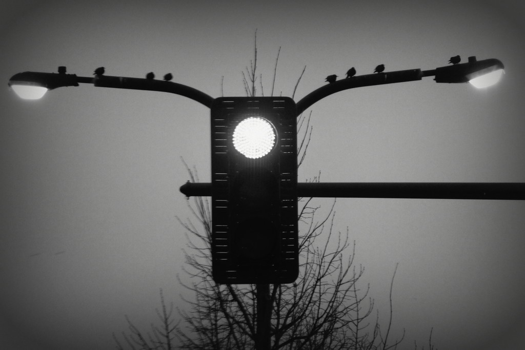 At The Light In Black & White by linnypinny