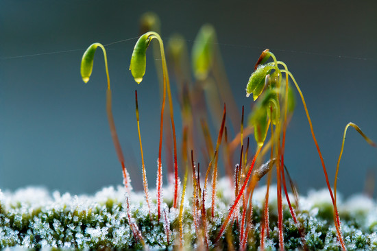 Frosty Moss by leonbuys83