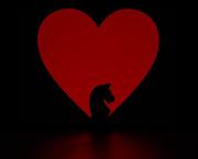 14th Feb 2015 - knight of hearts