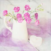 16th Feb 2015 - Carnations