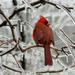 Slippery perch by cjwhite
