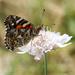Butterfly glory by flyrobin