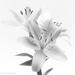 Beautiful flowers from a wonderful man by flyrobin