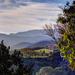Greener Pastures by Weezilou