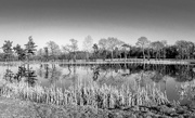 19th Feb 2015 - B&W February: Reflections in a small lake