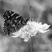 Butterfly patterns by flyrobin