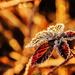 Hidden Frost by milaniet