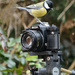 Great tit on a SLR by richardcreese