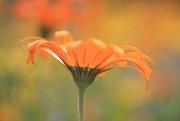 22nd Feb 2015 - orangebloom