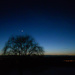 Weeping willow with moon and Venus above it by mittens