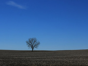 18th Jan 2015 - A not-quite-lonely tree on the road to Freeburg