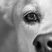 Foxy's Eye by darylo