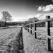 B&W February: Country Lane by vignouse