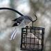 Mockingbird by essiesue