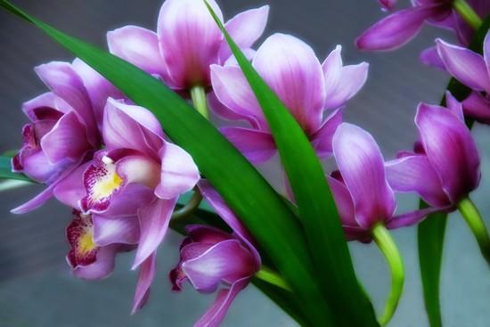 Orchids  by joysfocus