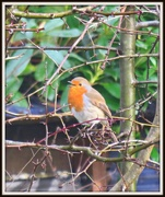 26th Feb 2015 - Singing for his breakfast
