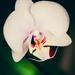 Floral Beauty by gailmmeek