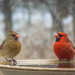 cardinal couple by slash