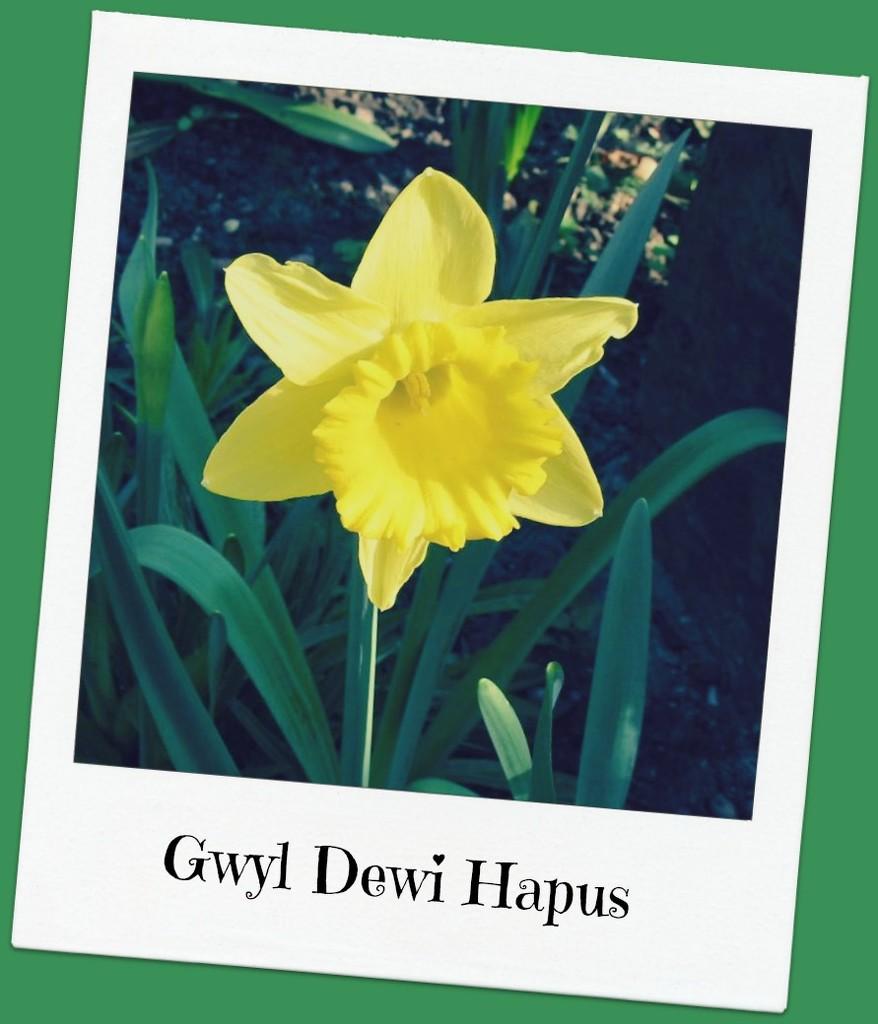 Gwyl Dewi Hapus - ( Happy St. David's Day ) by beryl