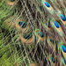 Feathers by bizziebeeme