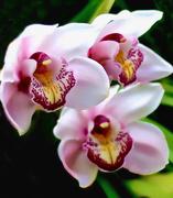 1st Mar 2015 - Orchids
