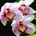 Orchids by joysfocus