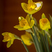Happy St.Davids Day..... by susie1205