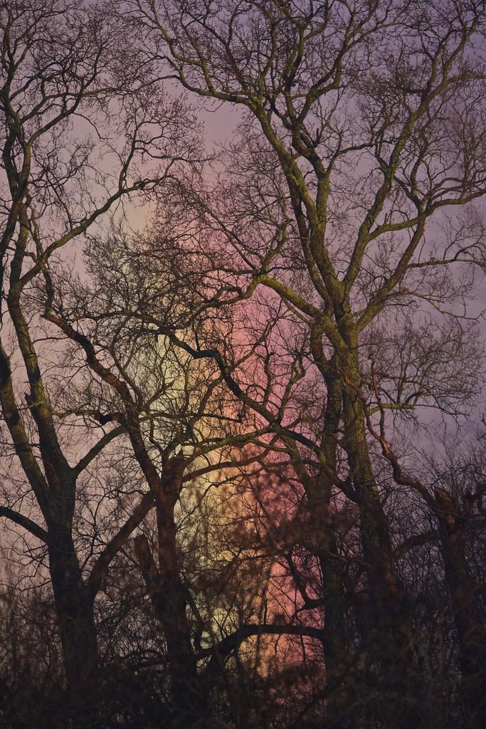 Tree highlighted by rainbow. by padlock