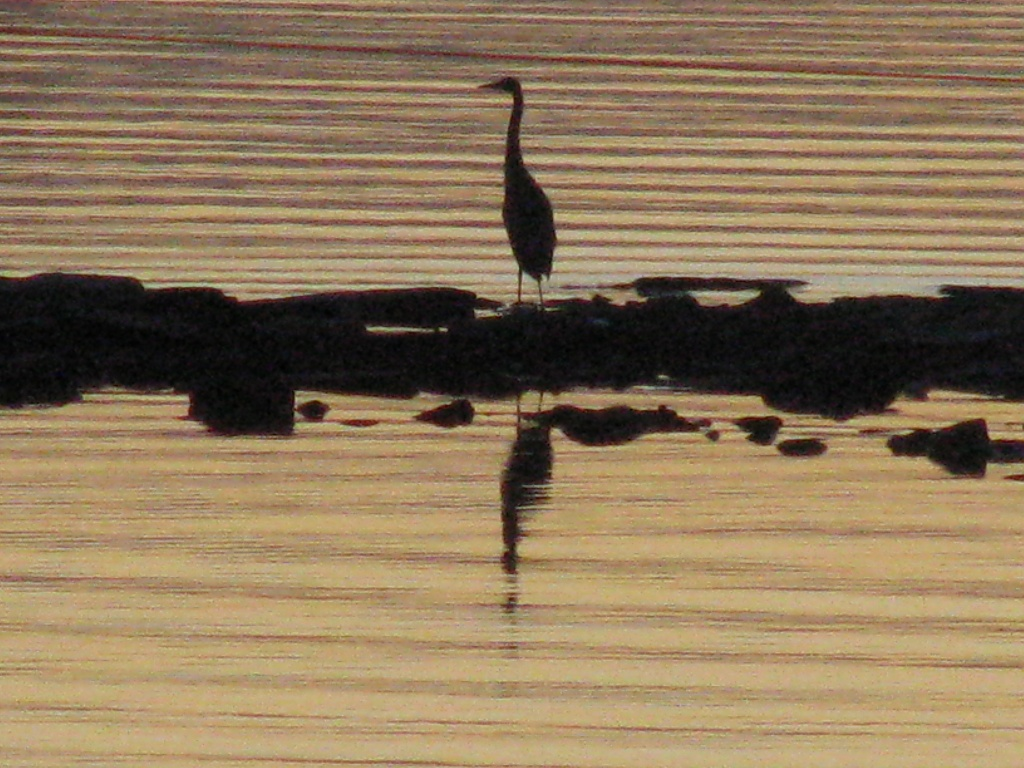me and my shadow or reflection by rrt