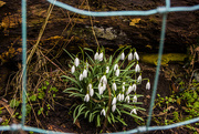 2nd Mar 2015 - Just a patch of snow