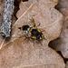 Leaf Surveyor by vignouse