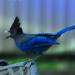 Angry bird by teiko