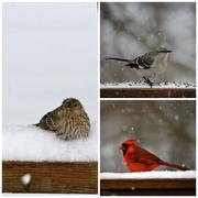 4th Mar 2015 - Bird Collage