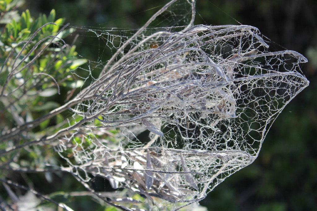 Sandy web. by gilbertwood