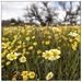 Shell Creek Wildflowers