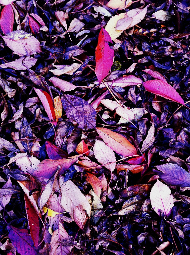 Dead Leaves and the Dirty Ground by rich57