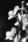 7th Mar 2015 - dark spring