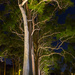 Trees at night by gosia