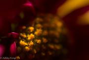 17th Nov 2014 - Flowers