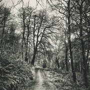 7th Mar 2015 - A walk in the woods.